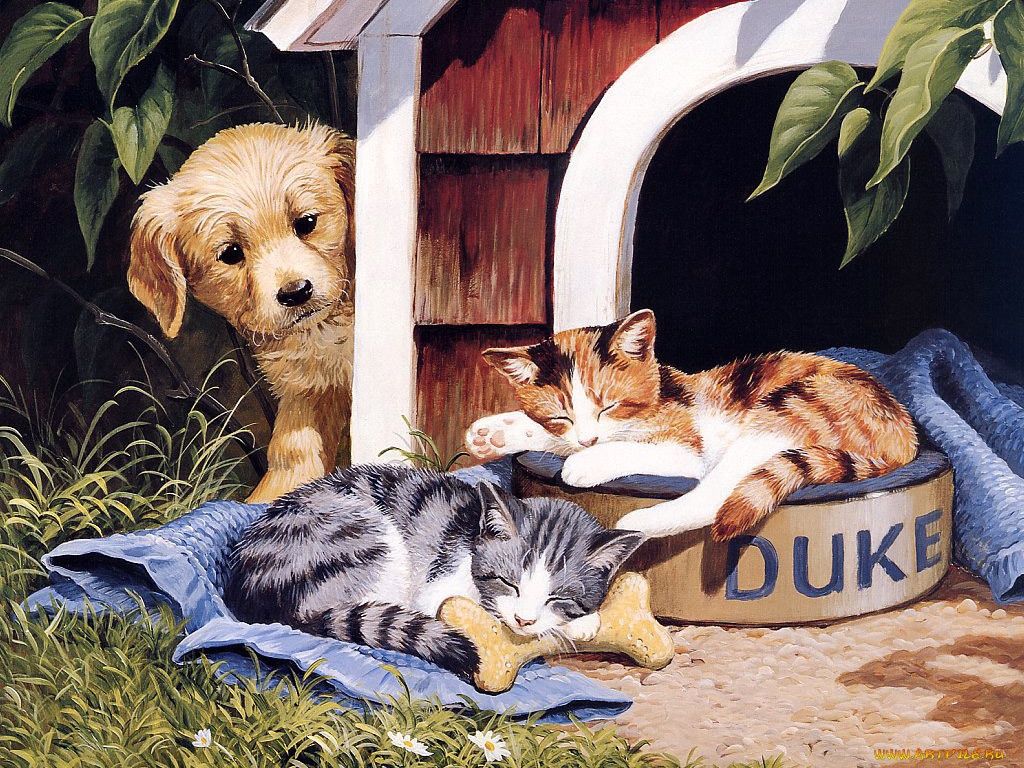 помощь картинки кот и собака во дворец замечательную пару ставят